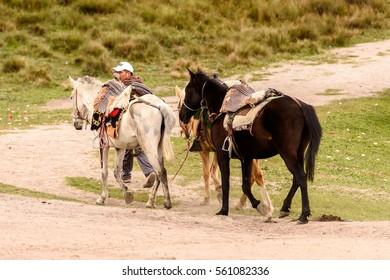 QUITO, ECUADOR - JAN 4, 2015: Unidentified Ecuadorian man carries a group of horses. 71,9% of Ecuadorian people belong to the Mestizo ethnic group