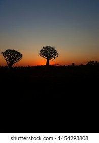 Quiver Tree Forest Sunset, The worlds most beautiful sunset, Namibia