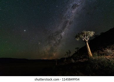 Quiver Tree Milky Way