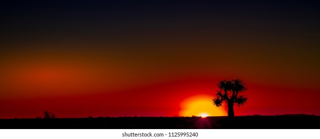 Quiver tree silhouetted at sunset in the Namaqualand natural region in the Northern Cape province of South Africa image with copy space in landscape format