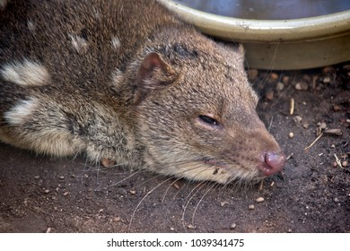the quoll is resting next to his water bowl