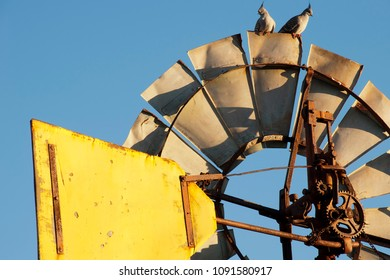 Quorn South Australia, Topknot pigeons on top of windmill in the late afternoon sun