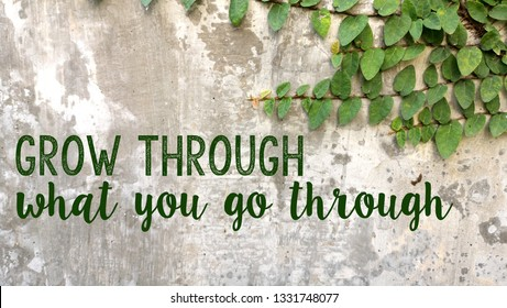 Quote Grow through what you go through written on concrete wall with climbing leaves plant