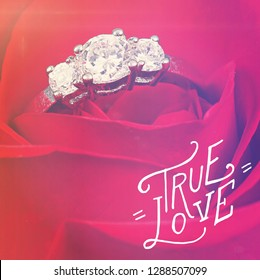 Quote - true love on red rose
