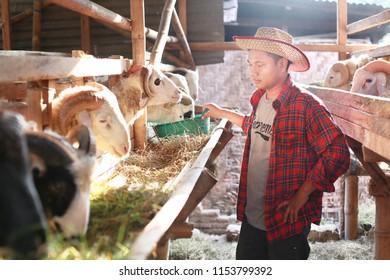 qurbani eid al adha asian man on goat farm. yogyakarta indonesia. august 11, 2018.