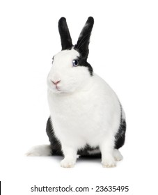 Rabbit (11 months) in front of a white background