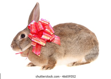 rabbit about a bow on a white background, is isolated.