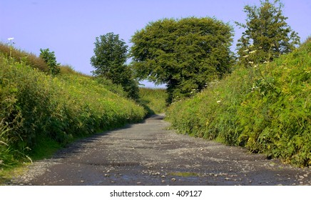 Rabbit Alley, carnoustie Scotland, so named because of its abundance of rabbits, june 2005