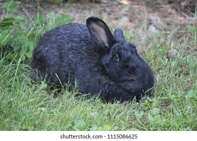 rabbit, animal, wallpaper animal, texture, animal picture, rabbit picture