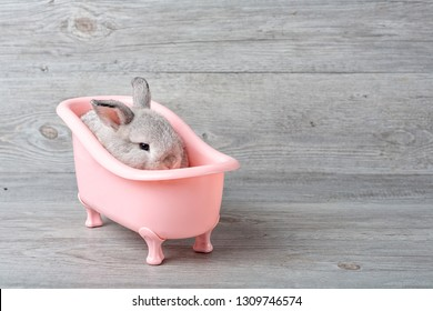Rabbit in the bathtub placed on a wooden floor. Happy easter Fancy rabbit on a wooden background. Cute little rabbit on a pink bathtub. Rabbit that is cute and precise according to breed standards