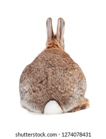 a rabbit with brown gray fur and long ears isolated against a white background