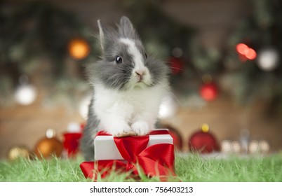 Rabbit, bunny, Gift boxes with red ribbon on Christmas background