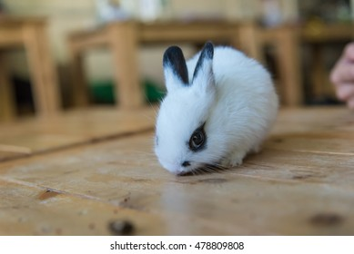 Rabbit in the cafe