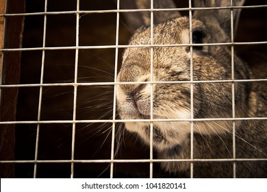 rabbit in a cage, close-up