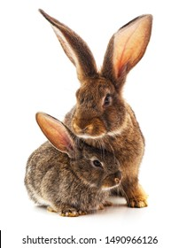 Rabbit with child isolated on a white background.