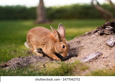 a rabbit is digging a hole on nature