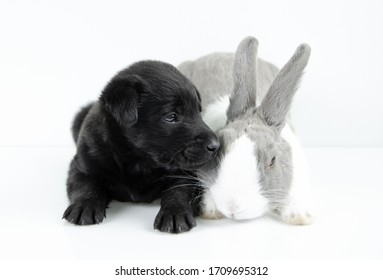 rabbit and dog sit on white table background. Easter day