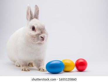 rabbit with Easter color eggs isolated on the white