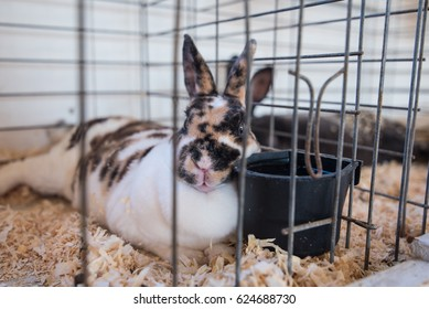 Rabbit exhibit at a country fair.