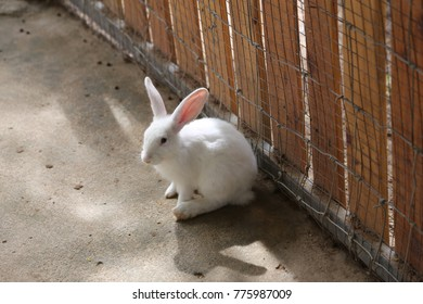rabbit in the farm