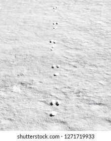 Rabbit footprints in newly fallen snow