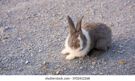 Rabbit in green field and farm way. Lovely and lively bunny in nature with happiness. Hare in the forest.