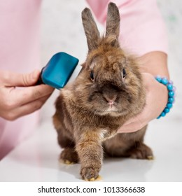 Rabbit in grooming salon