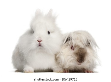 Rabbit and guinea pig portrait against white background