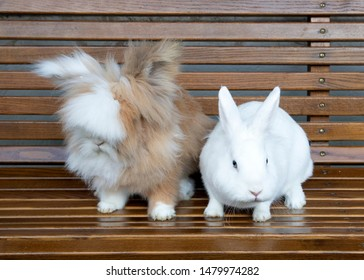 rabbit and hairy cat sitting at a bench