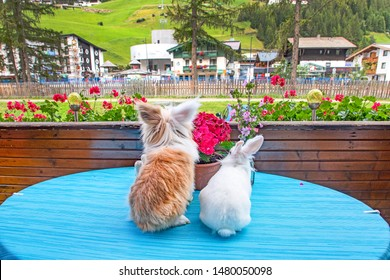 rabbit and hairy cat sitting at a table watching the village