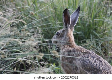 Rabbit hase tier animal wald - Shutterstock ID 2002170362