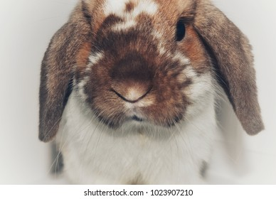 A rabbit isolated on a white background