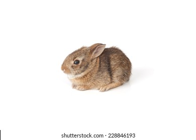 A rabbit isolated on a white background.