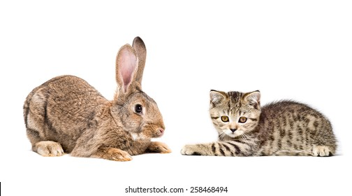 Rabbit and kitten lying down together isolated on white background