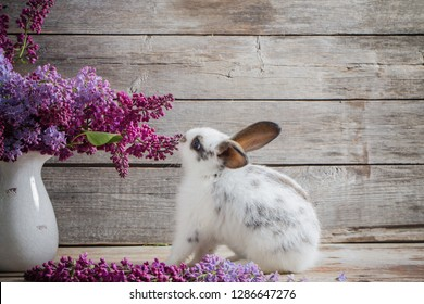 rabbit with lilac on wooden background
