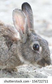 rabbit with long ears and lively eyes