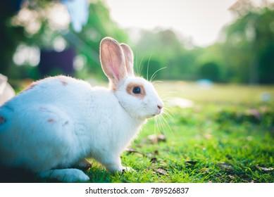 rabbit looking camera
