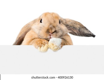 Rabbit looking over a signboard. Isolated on white background