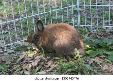 rabbit Luntik in the paddock at the ivolga forum in Russia