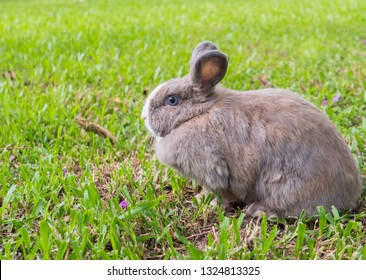 Rabbit on grass.