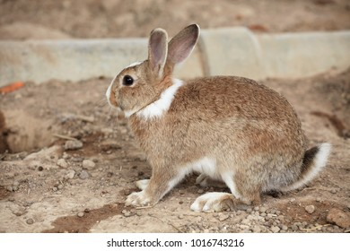 Rabbit on the ground next to the burrow
