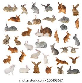 rabbit on a white background