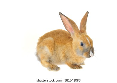 The rabbit on a white background