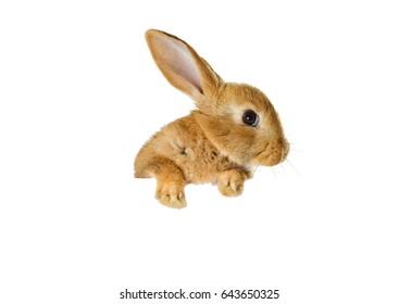 rabbit peeking