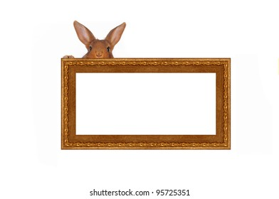 rabbit a picture frame on a white