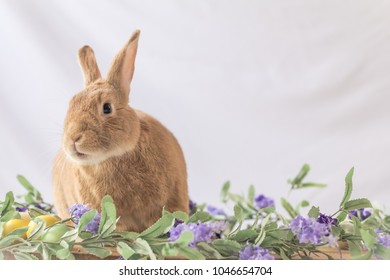 Rabbit poses with lilac flowers and wooden board in soft vintage setting, room for text, for Easter Bunny at Springtime