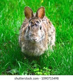 Rabbit posing for the camera