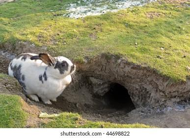 rabbit hole images stock photos vectors shutterstock rh shutterstock com