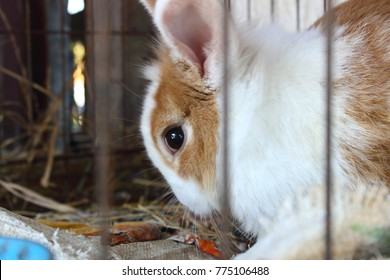 The rabbit was resting in a cage ,animal husbandry.