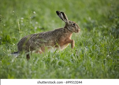 rabbit run